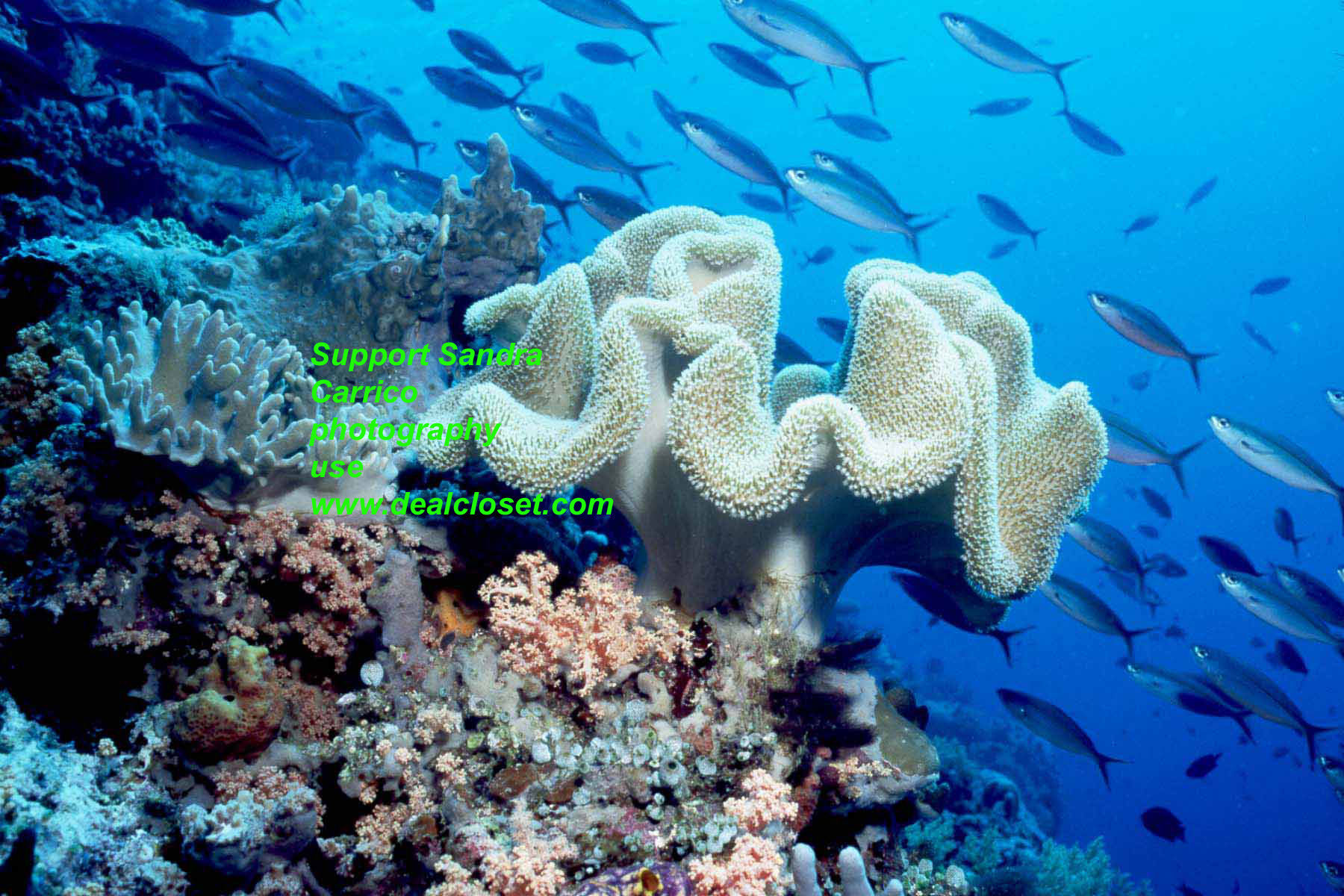 soft coral and fish landscape